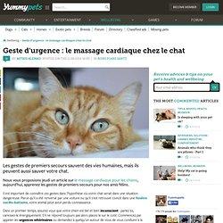 Premier secours : apprenez le massage cardiaque pour réanimer un chat