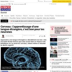 Cerveau : l'apprentissage d'une langue étrangère, c'est bon pour les neurones