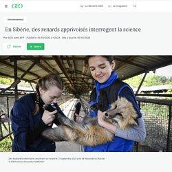 16 oct. 2020 - En Sibérie, des renards apprivoisés interrogent la science