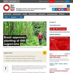 SCIDEV 20/06/17 Brazil's transgenic sugarcane stirs up controversy