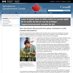AGRICULTURE CANADA 28/10/13 Lueur d'espoir dans la lutte contre la souche Ug99 de la rouille du blé en vue de protéger l'approvisionnement mondial de blé