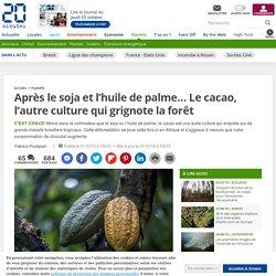 Après le soja et l'huile de palme… Le cacao, l'autre culture qui grignote la forêt