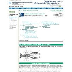 Pêches et aquacultureProcambarus clarkii