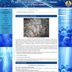 L'aquaculture de la crevette - Direction des ressources marines et minières