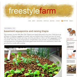 Basement Aquaponics & Raising Tilapia » FreestyleFarm