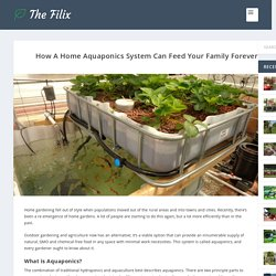 How A Home Aquaponics System Can Feed Your Family Forever - The Filix