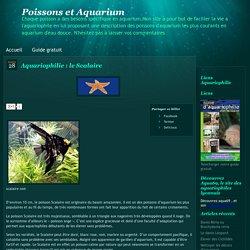 Aquariophilie : le Scalaire « Poissons et Aquarium