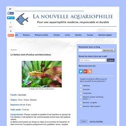 LA NOUVELLE AQUARIOPHILIE : Le Barbus doré (Puntius semifasciolatus)