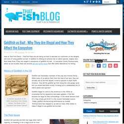 That Fish Blog