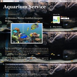 Aquarium Service: 10 Mistakes Novice Goldfish Keepers Make