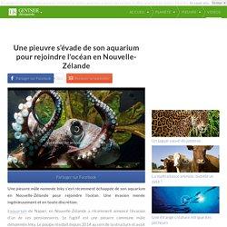 Une pieuvre s'évade de son aquarium pour rejoindre l'océan en Nouvelle-Zélande