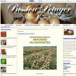 ARACHIDE OU CACAHUETE - PASSION POTAGER