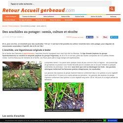 Arachide : semis, culture et récolte au potager