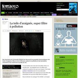 La toile d'araignée, super filtre à pollution