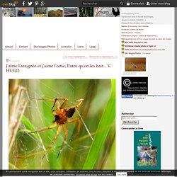 J'aime l'araignée et j'aime l'ortie, Parce qu'on les hait... V. HUGO - Vosges-passion