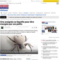 Une araignée se liquéfie pour être mangée par ses petits