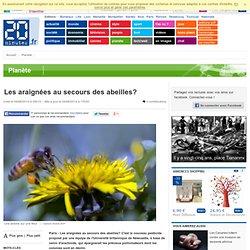 Les araignées au secours des abeilles?