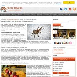 Les araignées : truc et astuces pour lutter contre à la maison