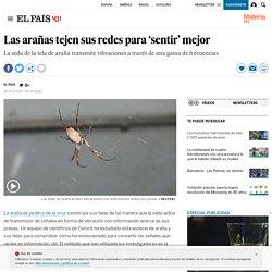Las arañas tejen sus redes para 'sentir' mejor