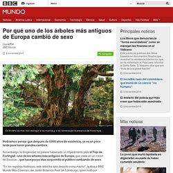 Por qué uno de los árboles más antiguos de Europa cambió de sexo - BBC Mundo