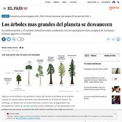 Los árboles mas grandes del planeta se desvanecen