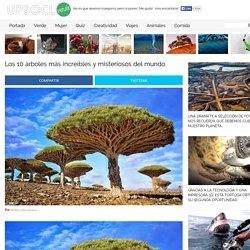 Los 10 árboles más increíbles y misteriosos del mundo
