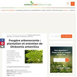 Fougère arborescente : plantation et conseils d'entretien