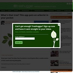 What's that tree? This app puts an arborist in your pocket : TreeHugger