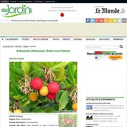 Arbousier (Arbouse), Arbre aux fraises, Arbutus unedo