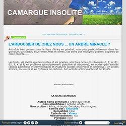 L'ARBOUSIER DE CHEZ NOUS ... UN ARBRE MIRACLE ? - CAMARGUE INSOLITE