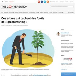 Ces arbres qui cachent desforêts de«greenwashing»