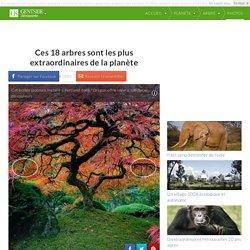 Ces 18 arbres sont les plus extraordinaires de la planète