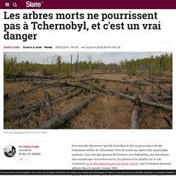 Les arbres morts ne pourrissent pas à Tchernobyl, et c'est un vrai danger