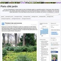 arbuste persistant » Paris côté jardin » Page 4