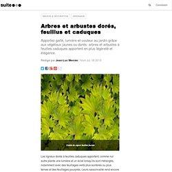 Arbres et arbustes dorés, feuillus et caduques: Ligneux à feuillage caduque jaune ou doré, de la couleur au jardin