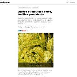 Arbres et arbustes dorés, feuillus persistants: Ligneux à feuillage persistant jaune, doré, de la couleur au jardin
