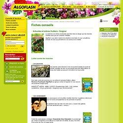 Arbustes et arbres fruitiers - Soigner - Fiches conseils - Conseils et services - Algoflash