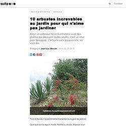 10 arbustes increvables au jardin pour qui n'aime pas jardiner