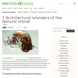 7 Architectural Wonders of the Natural World