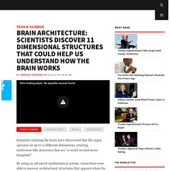 Brain Architecture: Scientists Discover 11 Dimensional Structures That Could Help Us Understand How the Brain Works