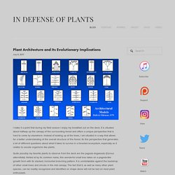Plant Architecture and Its Evolutionary Implications