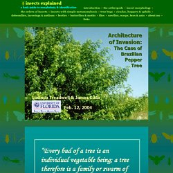 Architecture of invasive plants in relation to Brazilian pepper tree, Schinus terebinthifolius