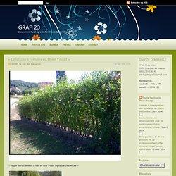 GRAF 23 » Blog Archive » « Créations Végétales en Osier Vivant »