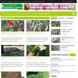 Ground Covers Archives - Birmingham Gardening Today
