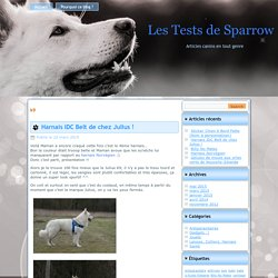 k9 Archives - Les Tests de SparrowLes Tests de Sparrow