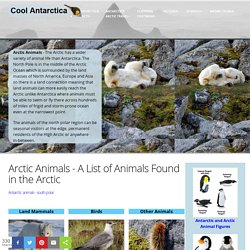 Cool Antartica: Arctic Animals