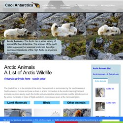 Arctic Animals - a list of North Polar animals