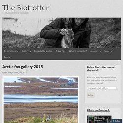 Arctic fox gallery 2015