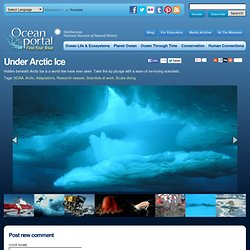 Under Arctic Ice | The Ocean Portal | Smithsonian Institution