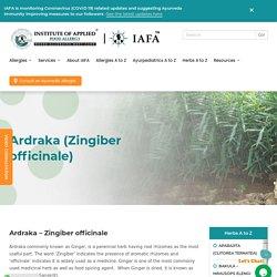 Ardraka (Zingiber officinale) -